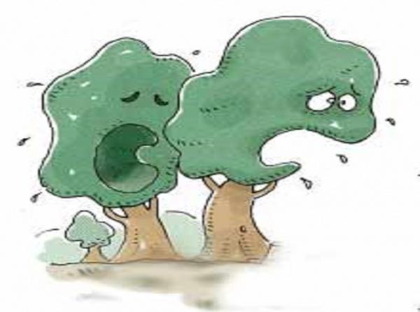 Ağlayan Ağaç Masalı Oku çocuk Masalları